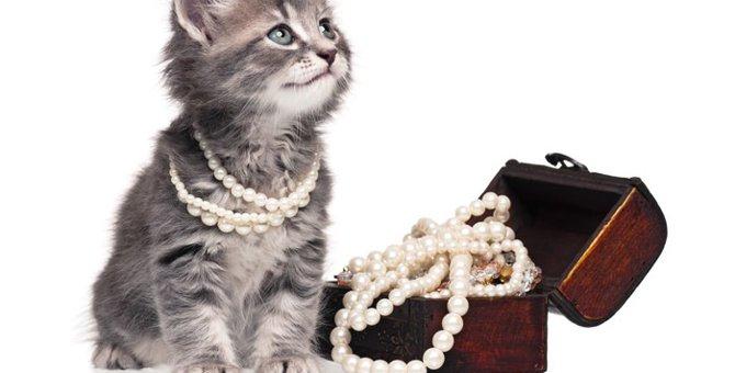 生活を彩る猫グッズ レクトトレー