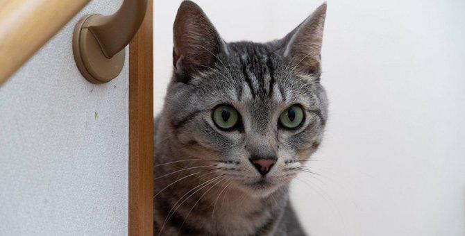 猫が『気を遣っている』ときにみせる行動5つ