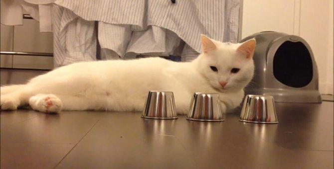 鈴の位置をピタリと当てる!カップ当てが得意な猫ちゃん