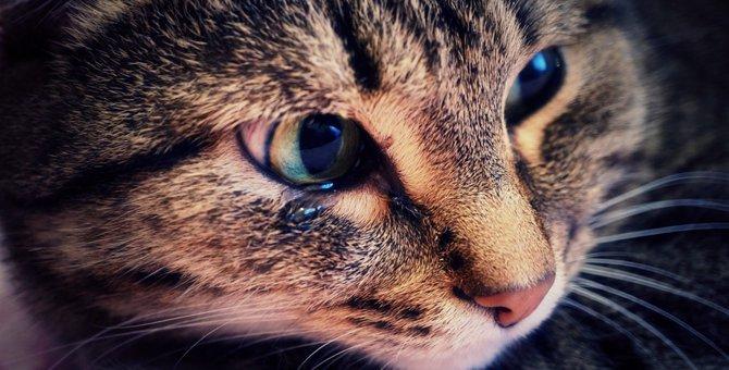 猫が涙を片目から流している時の原因