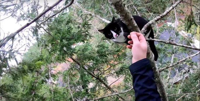 猫が高く細い木の先端で悲鳴!難航する救出活動の行方は…