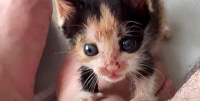 ママに育児放棄された子猫…運命の出会いを経て幸せに♡