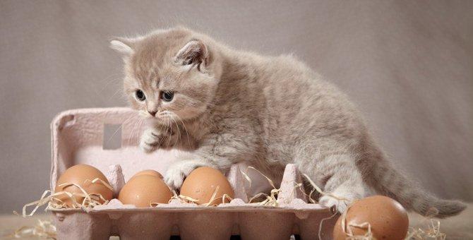 猫に『卵』を与える際の注意点4つ