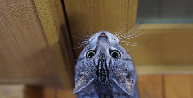 猫が飼い主に『ストーカー行為』をする3つの原因と対処法