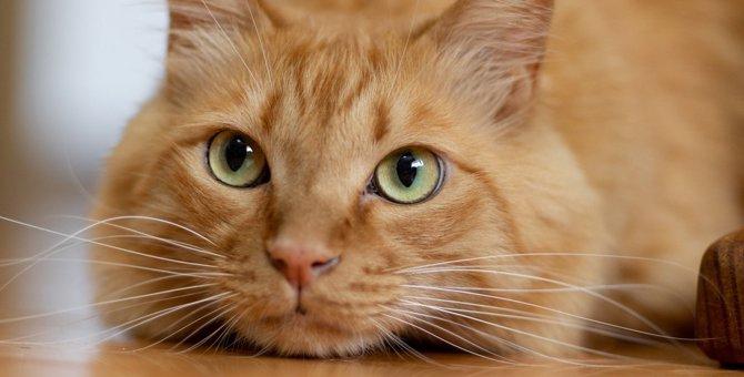 猫の『表情』から読み解く気持ち6つ