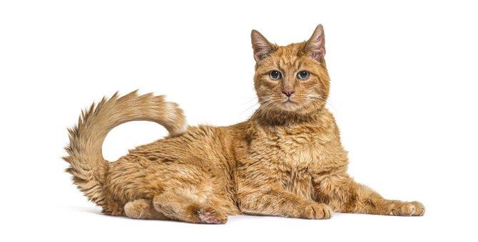 猫の『足腰』が弱る原因4つ!将来の寝たきり防止のための対策とは?
