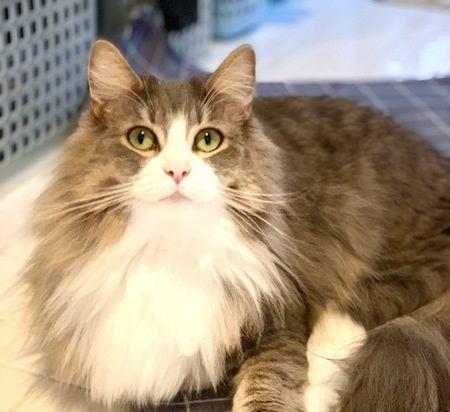 抱っこが好きな猫の種類3選!品種の特徴や性格について