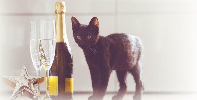 猫にワインを与えてはいけない!理由と対処法