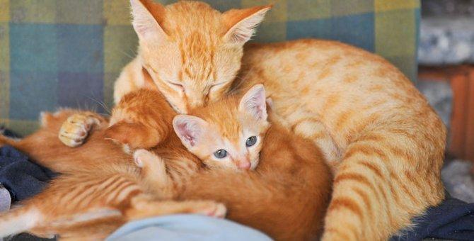 猫の首の後ろをつかむと大人しくなる理由
