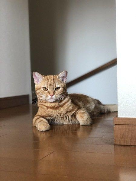いつもクールな猫の本当の気持ち3つ