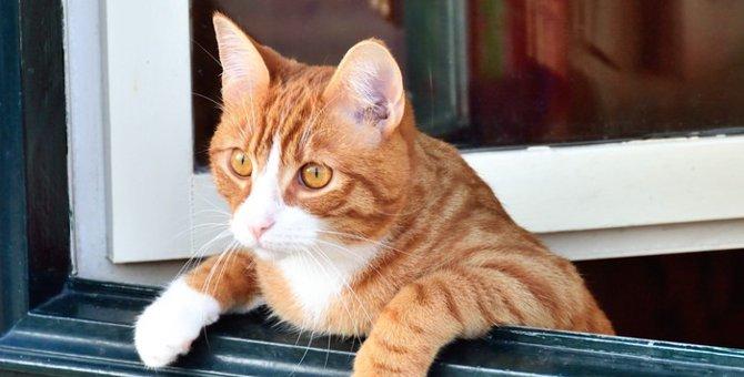 飼い猫の飼育環境は?室内外と放し飼いのメリット・デメリット