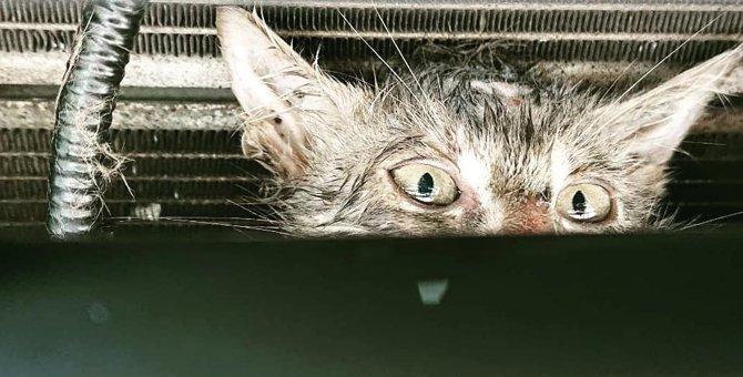 子猫がハイブリッド車のボンネットから出られない…!救助劇の一部始終
