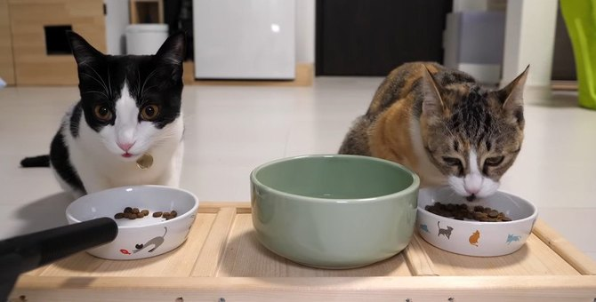 待ちきれない~!新しいご飯で猫ちゃんテンションMAX♪