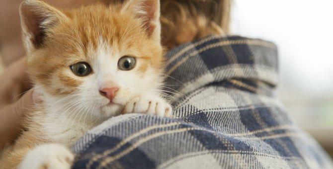猫を衝動的に買った人が陥りやすいこと3つ