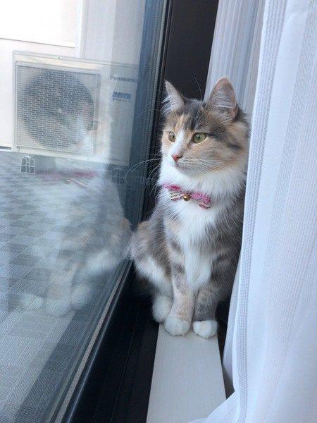 猫がカーテンの裏にいる7つの理由