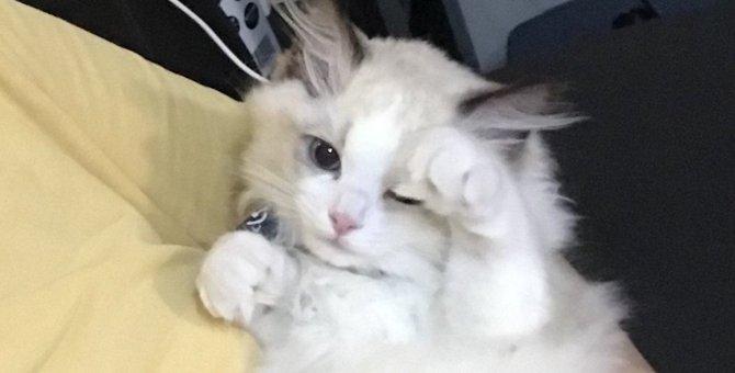 猫が『自己アピール』している時に見せる仕草5選