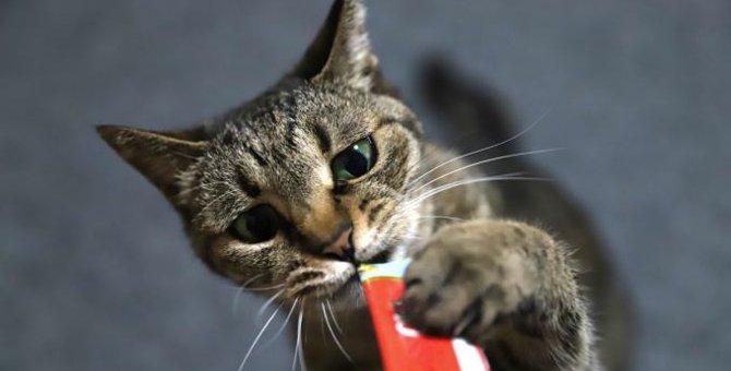 猫が『思わずウットリしてしまう匂い』3選