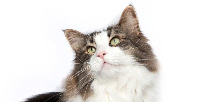 保護猫が我が家に来るまでの手続きやお迎え後しないといけない事