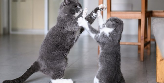 猫同士の喧嘩にもルールはある?7つの事
