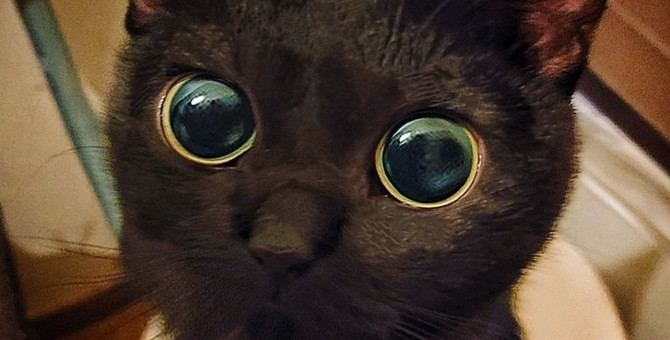 あ、あざと過ぎる!黒猫さんの『つぶらな瞳』にノックダウン!