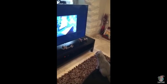 猫の本能刺激!テレビに映ったアニメのネズミを捕まえようとする猫