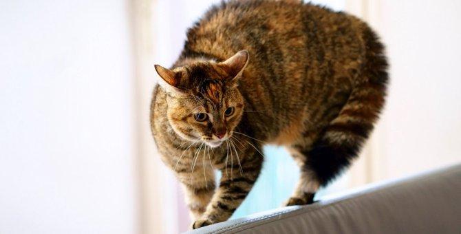 猫が背中を丸めて横歩きした時の対処法5つ
