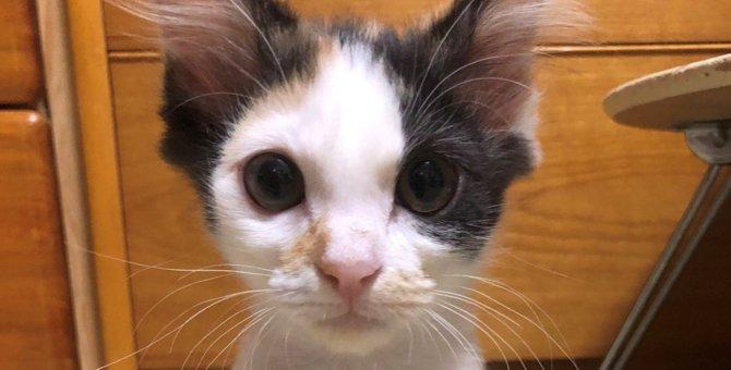 【愛情の証】保護猫さんの成長を追った4枚の写真が話題【感動】