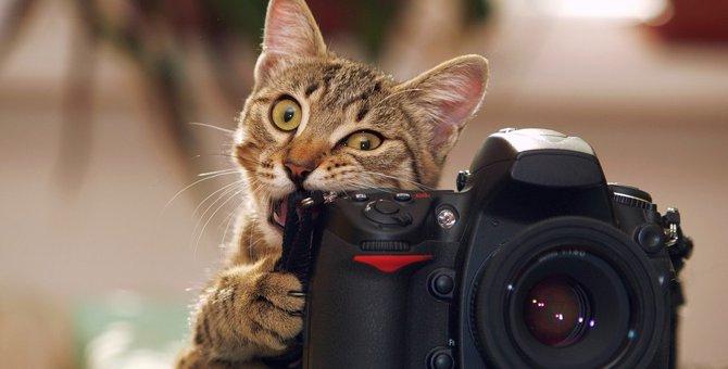 猫が発狂してしまう原因4つ!無意識に猫を刺激しているのかも…