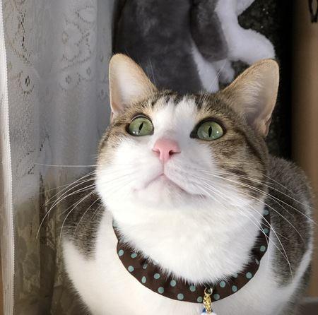 話しかけられるとうなずいてくれる猫の心理3つ