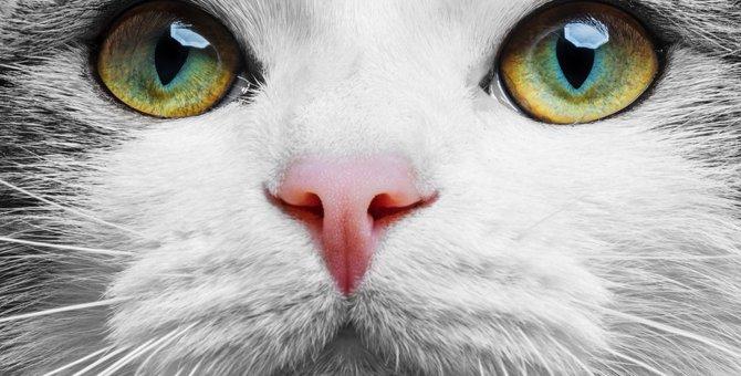 猫が上目遣いをする意味と心理