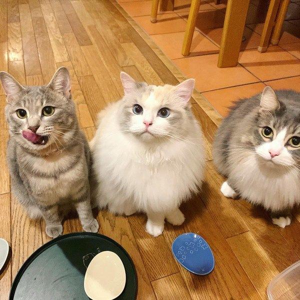 愛猫のためのちょい足し『トッピングご飯』5選
