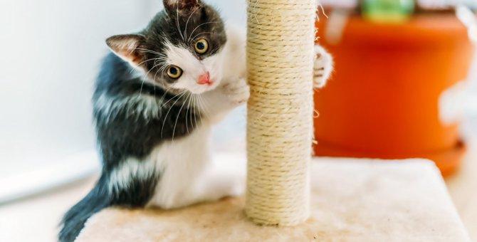 猫の爪とぎのしつけグッズを年齢別に紹介!トレーニングのポイントも教えます