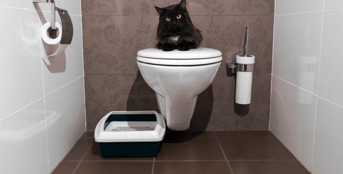 猫がおしっこを失敗する原因とその対策とは
