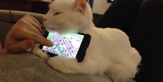 世界でたったひとつ、猫のスマホスタンド!?