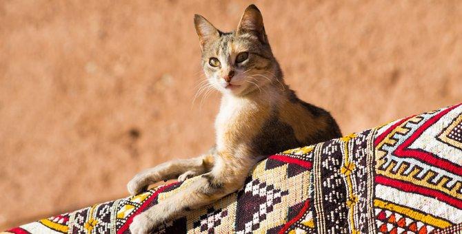 「猫に九生あり?」9つの命を持つと言われる5つの理由