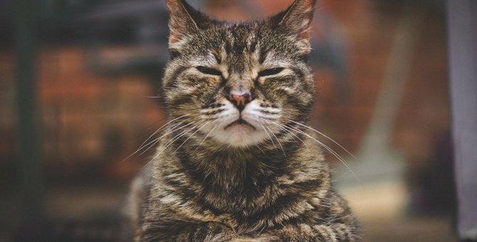 猫の『老化』はどのようにやって来る?飼い主が知ってきたいケア方法5つ