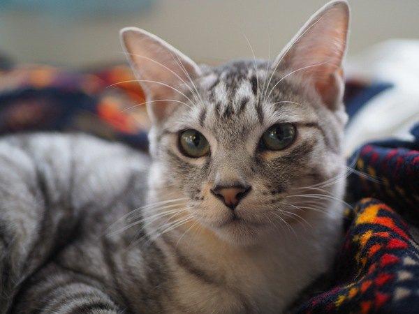 猫が飼い主の外出を察知する方法4つ