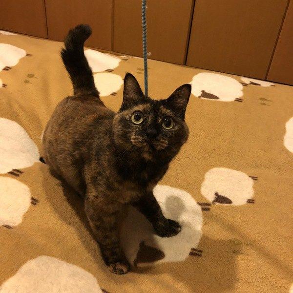 猫のしっぽピーンは何のメッセージ?4つの気持ち