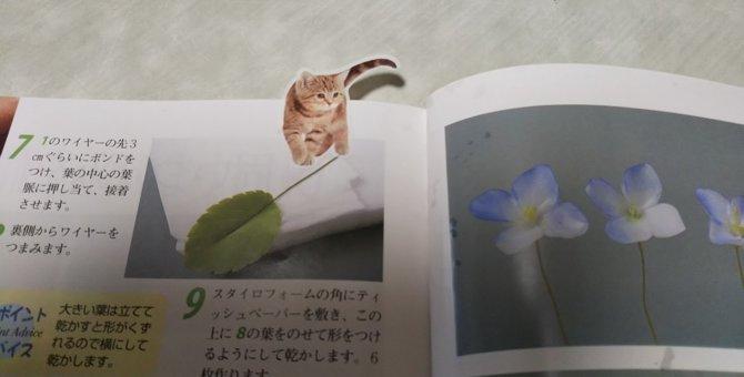 コスパ最高!猫好きにはたまらない可愛い猫インデックスとは?
