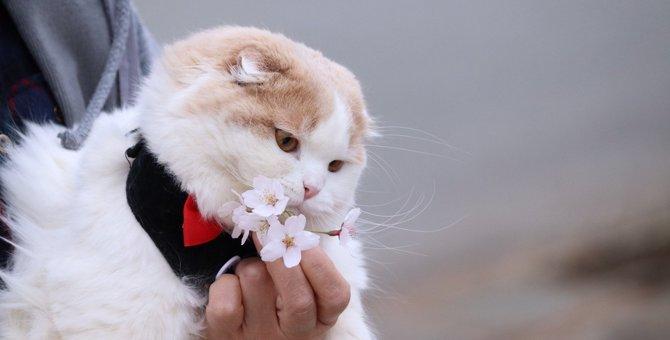 猫に絶対しちゃダメな『抱き方』4選