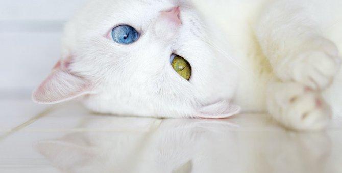 発情期の猫にしてはいけないNG行為5つ