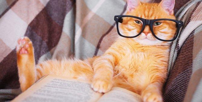 嫁姑問題も猫が一喝!?猫がつく『面白い言葉』3選