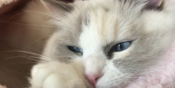 猫は本当にクール?人間が誤解しやすい猫のイメージ3つ