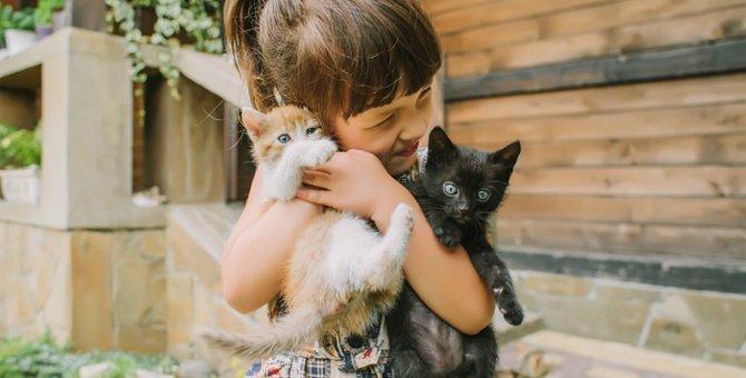 【猫の多頭飼いを成功させる】気になるアレコレ!実際飼育費はいくら掛かるの?