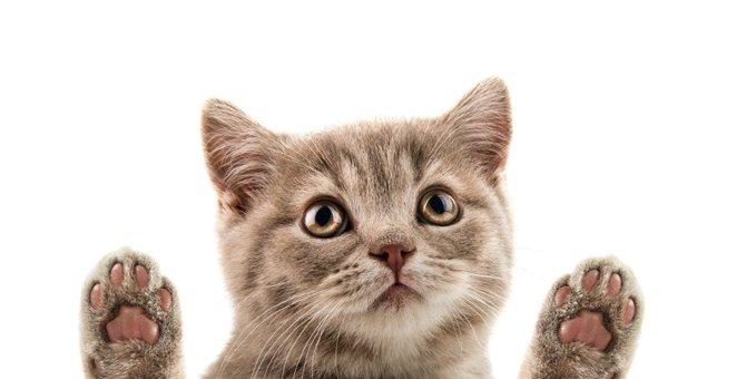 日頃のお手入れが大切!猫の『肉球』に最適なケア方法4選