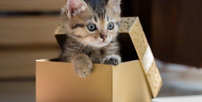 猫は「箱」が大好き!どんな箱によく入る?