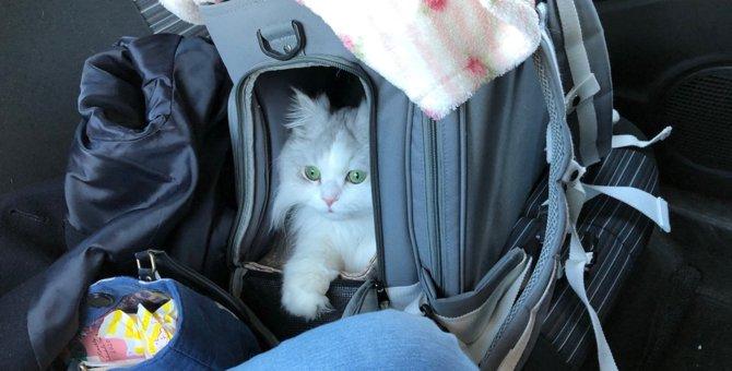 愛猫とドライブするときに注意するべきこと4つ