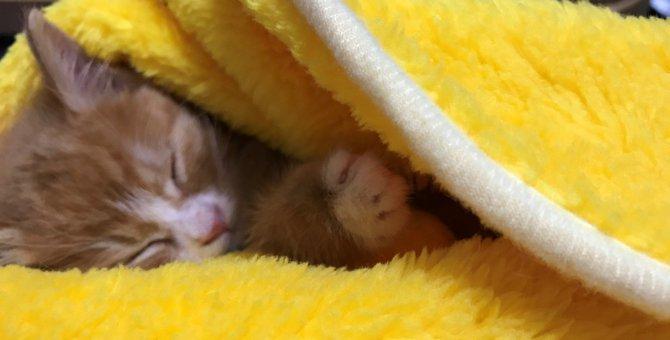 暴風雨の中小さな体で『生きたい』と鳴き続けた子猫『虎太郎(こたろう)』