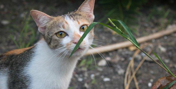 猫が「臭いニャ〜」と感じてしまう『匂い』3つ