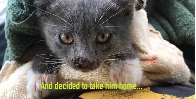 砂漠に遺棄された子猫がカラスに襲われ窮地に...